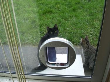 Cat Flap Fitter Derby